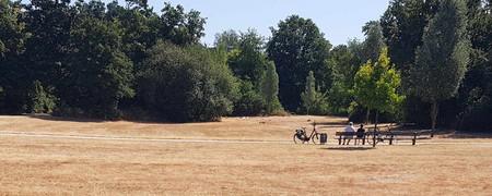 Ausgetrocknete Wiese in einem Park  - Link auf: Klimanotstand in Kleve
