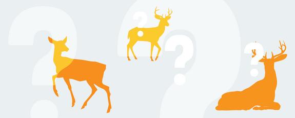 Grafik mit mehreren Hirschen und Fragezeichen